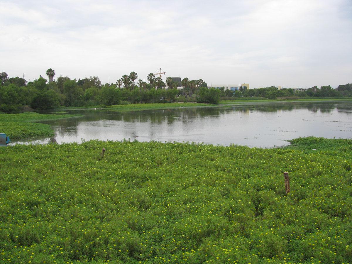 Lake-Machado-Before-06