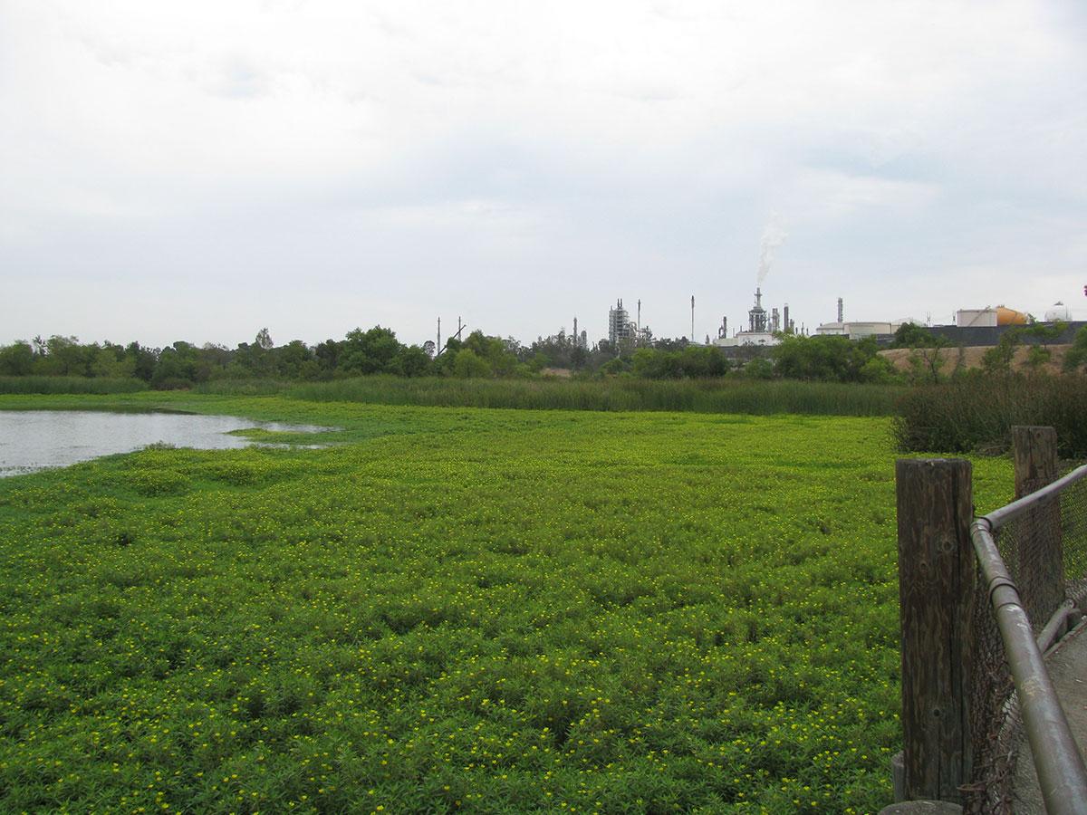 Lake-Machado-Before-07