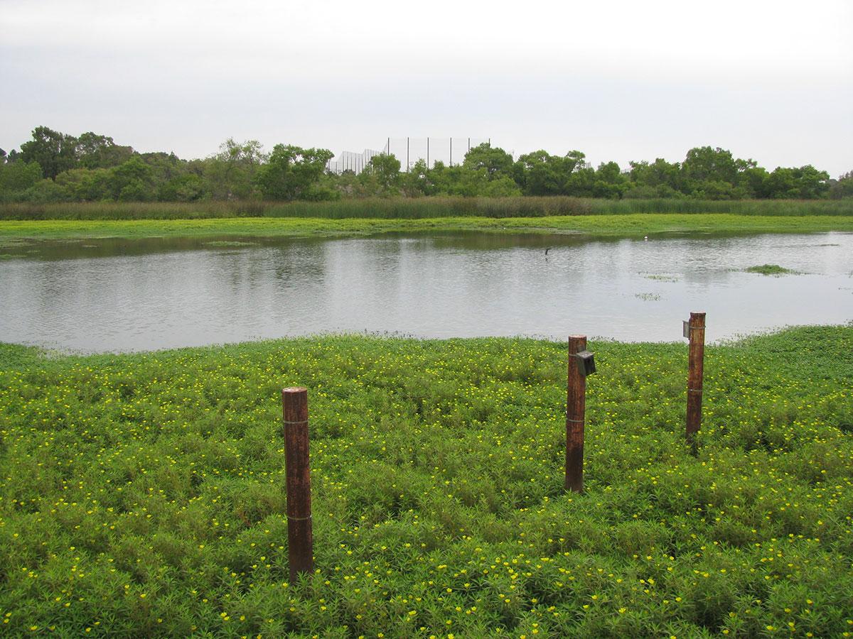 Lake-Machado-Before-08