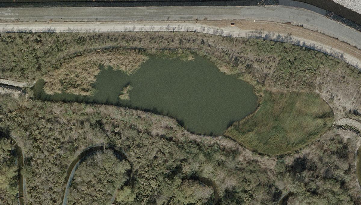Pond-C-Before